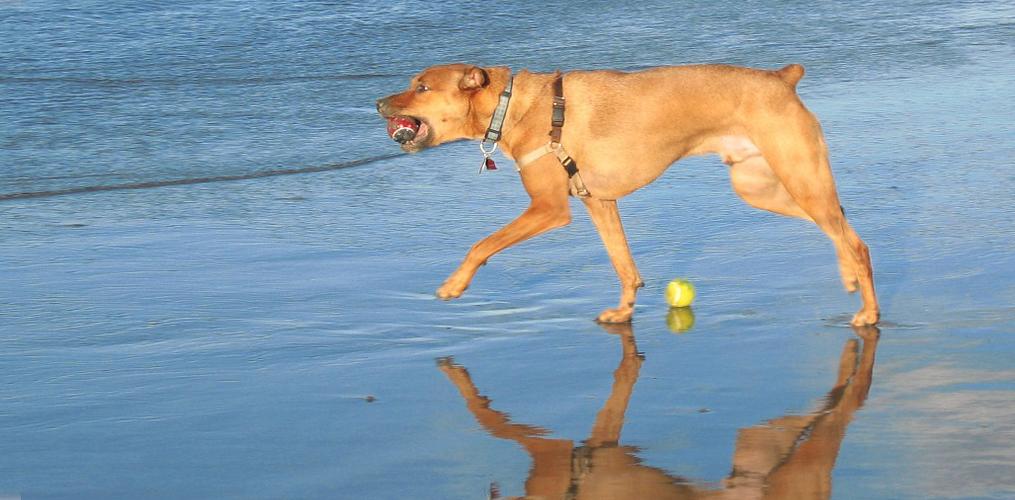 aura3 dog
